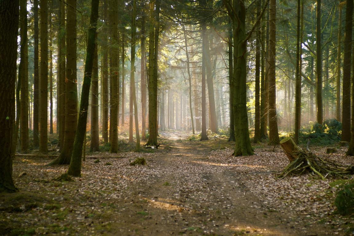 Wald im Jura als Impressum